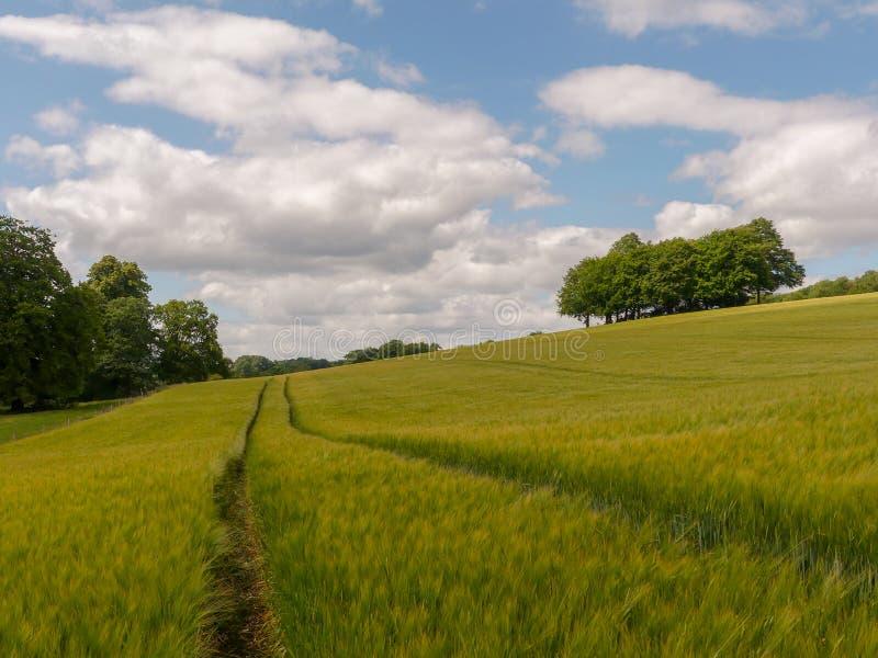 Beau taillis des arbres dans le domaine d'orge, Latimer, Buckinghamshire images libres de droits