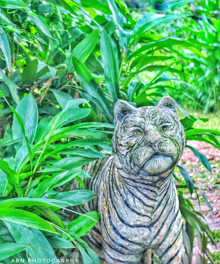 Beau tigre de Bengale royal dans la jungle photos libres de droits