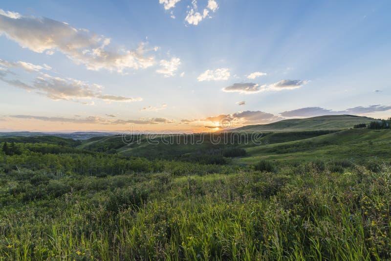 Beau tir des champs verts sous un ciel clair pendant le coucher du soleil images libres de droits