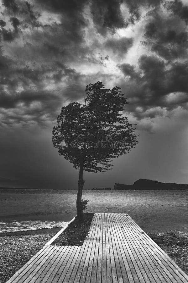 Beau tir noir et blanc foncé d'un arbre simple sur un pilier en bois près de l'océan images stock