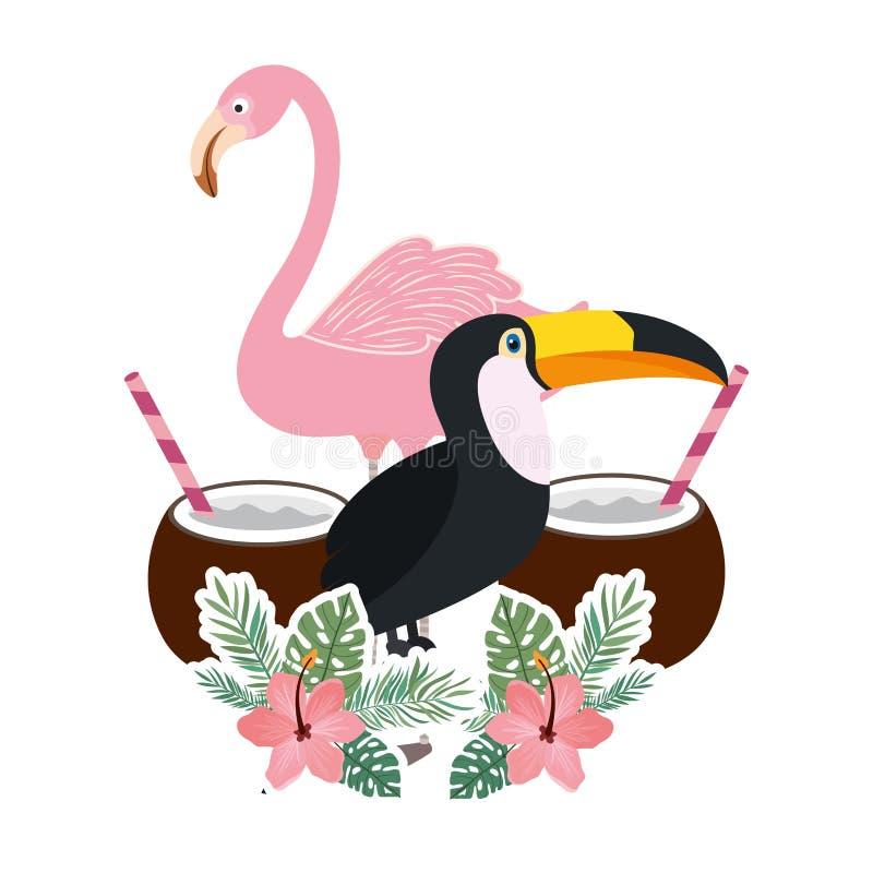 Beau tucan et Flamand sur le fond blanc illustration stock