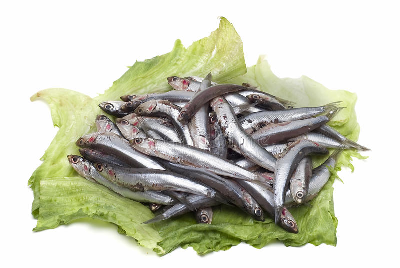Beaucoup d'anchois frais. images libres de droits