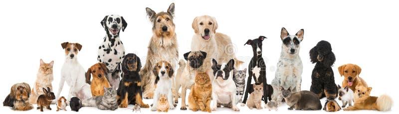 Beaucoup d'animaux familiers image libre de droits