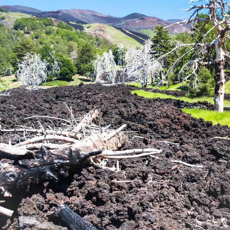 Beaucoup d'arbres brûlés dans l'écoulement de lave durci sur l'Etna image libre de droits