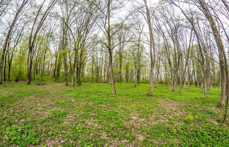 Beaucoup d'arbres par la lentille de poisson-oeil photo libre de droits