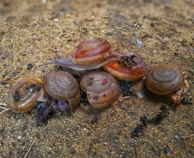 Beaucoup d'escargots photos libres de droits