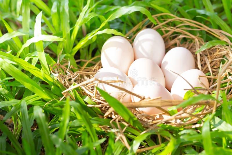 Beaucoup d'oeufs de canard sur le foin, fond de vert d'herbe images stock