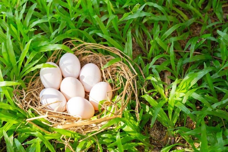 Beaucoup d'oeufs de canard sur le foin, fond de vert d'herbe photo libre de droits