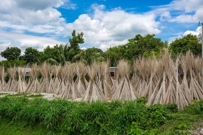 Beaucoup de bâtons de jute sont empilés pour sécher au soleil à Madhabdi, Narsingdi, Bangladesh photo stock