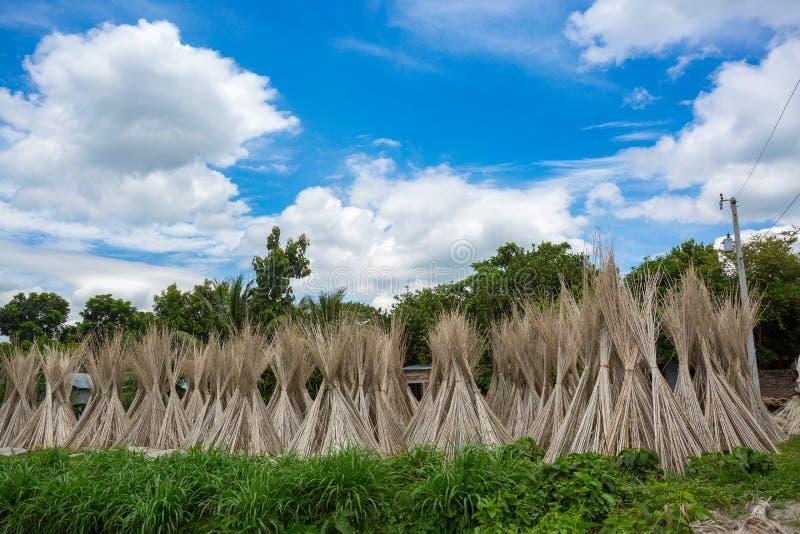 Beaucoup de bâtons de jute sont empilés pour sécher au soleil à Madhabdi, Narsingdi, Bangladesh photos libres de droits