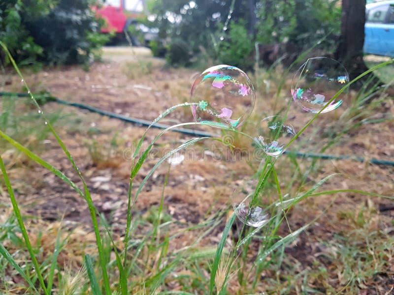 Beaucoup de belles bulles de savon volant sur le fond vert, plan rapproché Grandes bulles de savon colorées en nature Savon de be image stock
