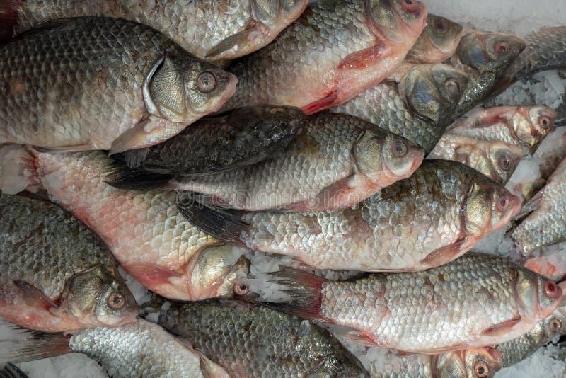 Beaucoup de carcasses crues de carpe de poissons sur la glace photos libres de droits