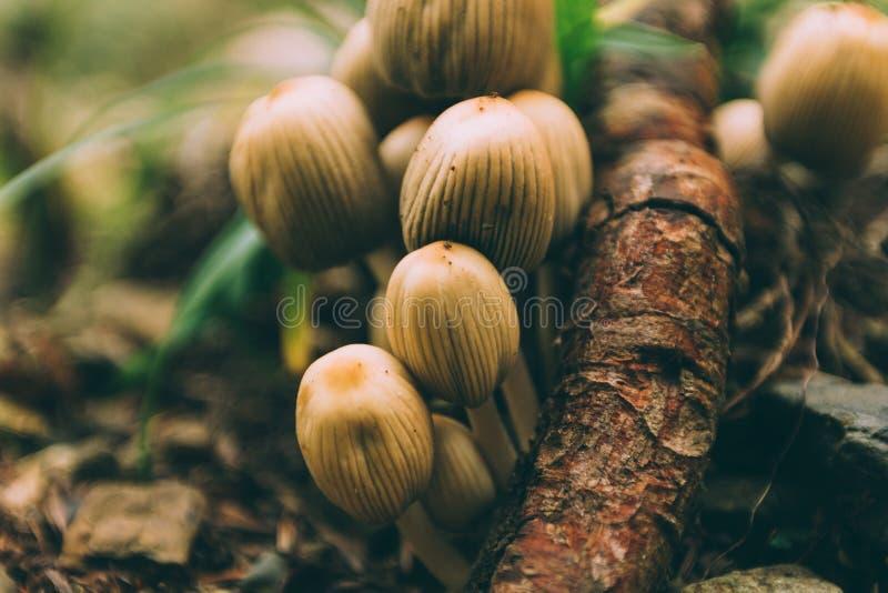 Beaucoup de champignons non comestibles dangereux dans une forêt foncée images stock