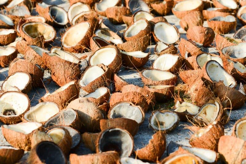 Beaucoup de coquille de chair de noix de coco et de noix de coco sur le béton blanc pour le séchage naturel Fruit tropical faisan image libre de droits