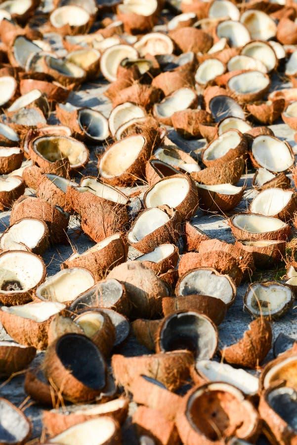 Beaucoup de coquille de chair de noix de coco et de noix de coco sur le béton blanc pour le séchage naturel Fruit tropical faisan photo stock