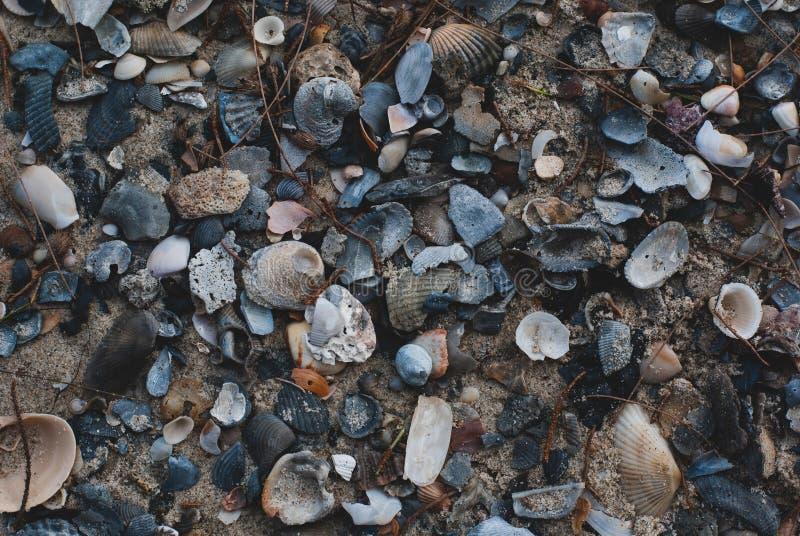 Beaucoup de coquilles cassées empilent sur le sable de plage dans la fin vers le haut de la vue, là photographie stock libre de droits