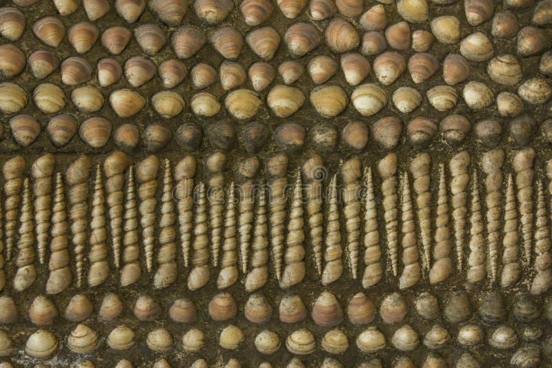 Beaucoup de coquilles rouges blanches de diverses formes et tailles en ciment foncé surface naturelle approximative de texture photographie stock libre de droits