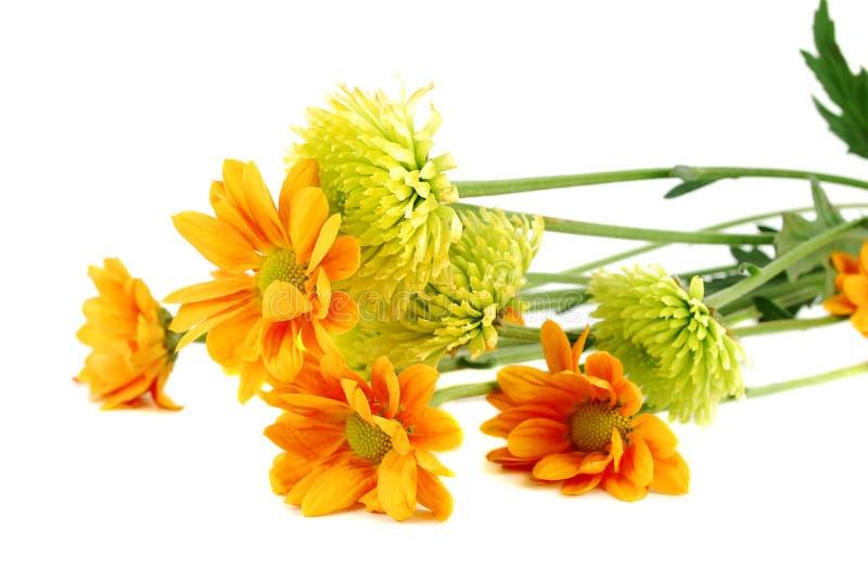 Beaucoup de différentes fleurs colorées d'automne images stock