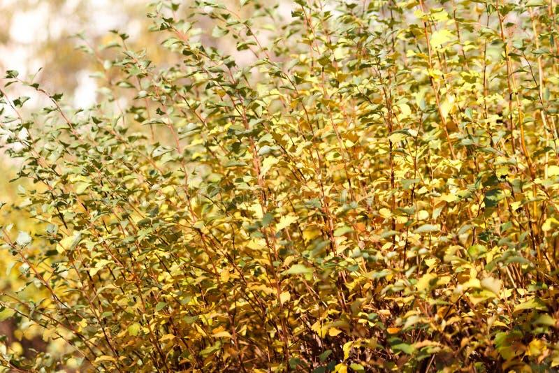 Beaucoup de feuilles d'automne image stock