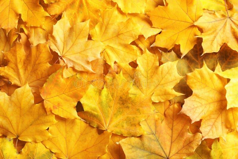 Beaucoup de feuilles d'automne comme fond photos stock