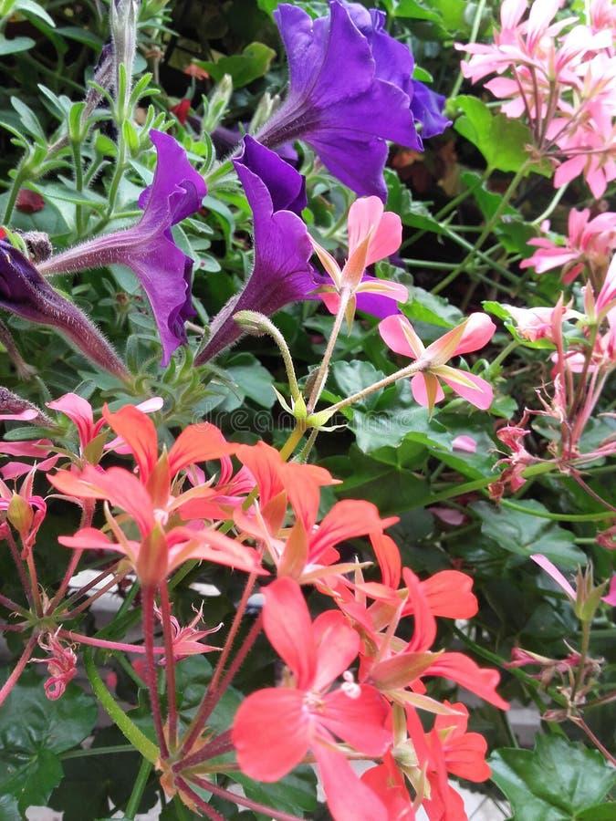 Beaucoup de fleurs photos stock