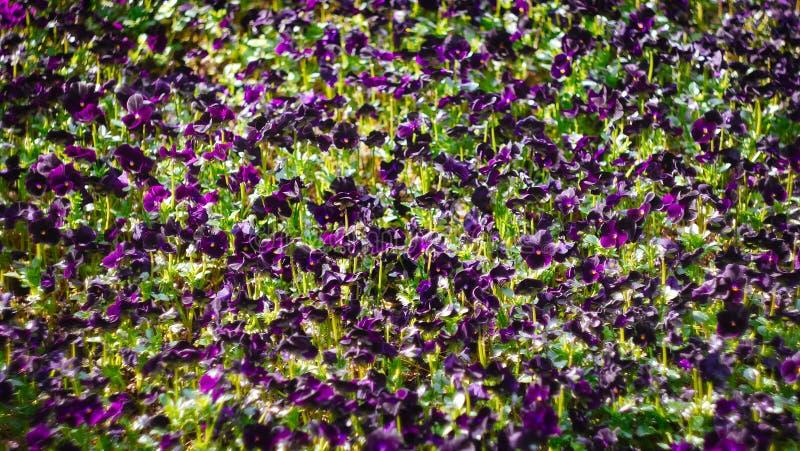 Beaucoup de fleurs en été photographie stock