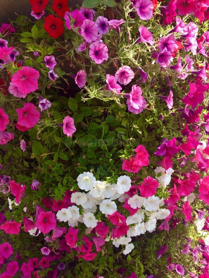 Beaucoup de fleurs en parc, rouge, blanc, rose images stock