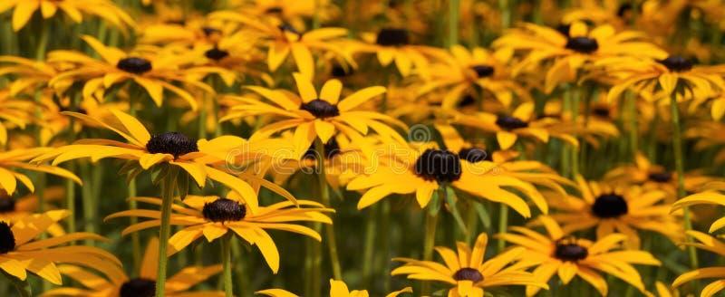 Beaucoup de fleurs sur une photo images stock