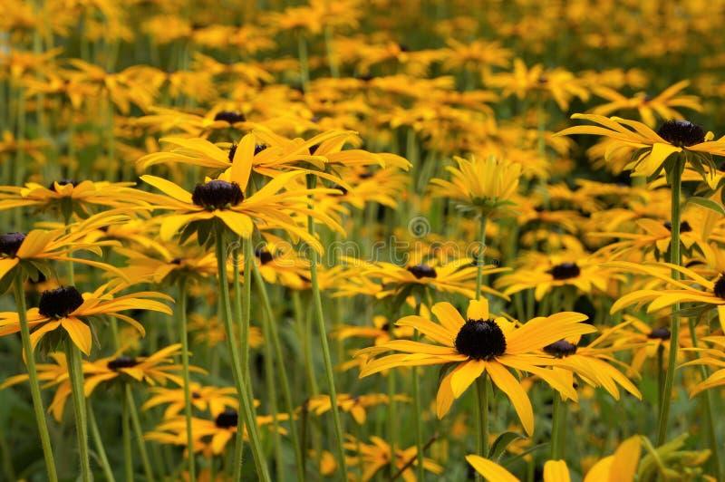 Beaucoup de fleurs sur une photo photo libre de droits
