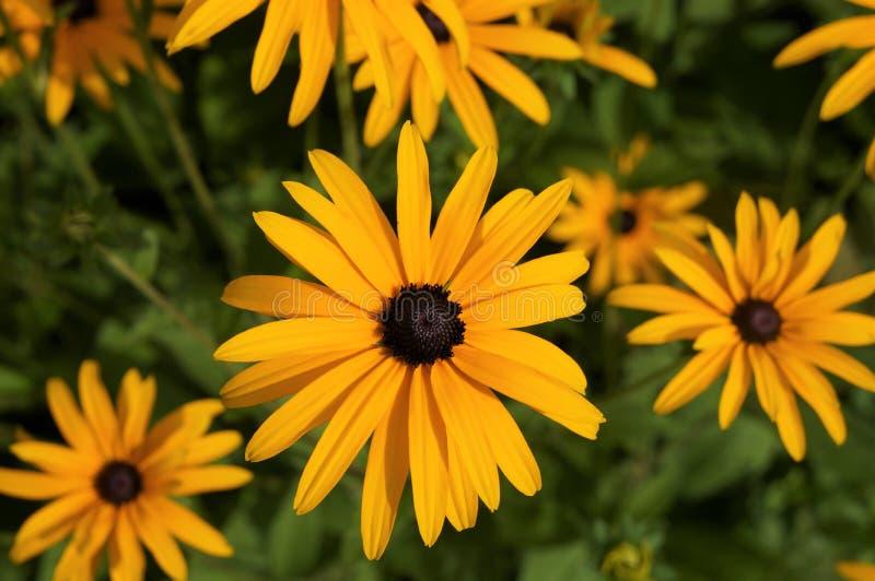 Beaucoup de fleurs sur une photo image libre de droits