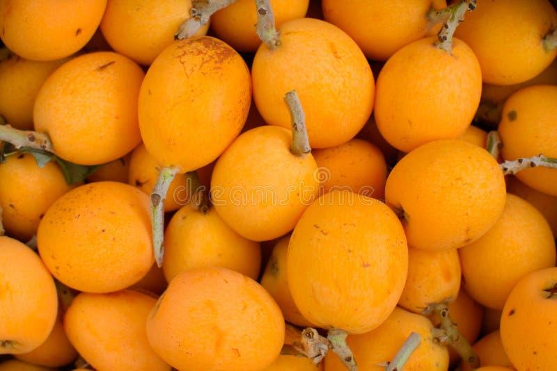 Beaucoup de fruits de nèfle photos stock