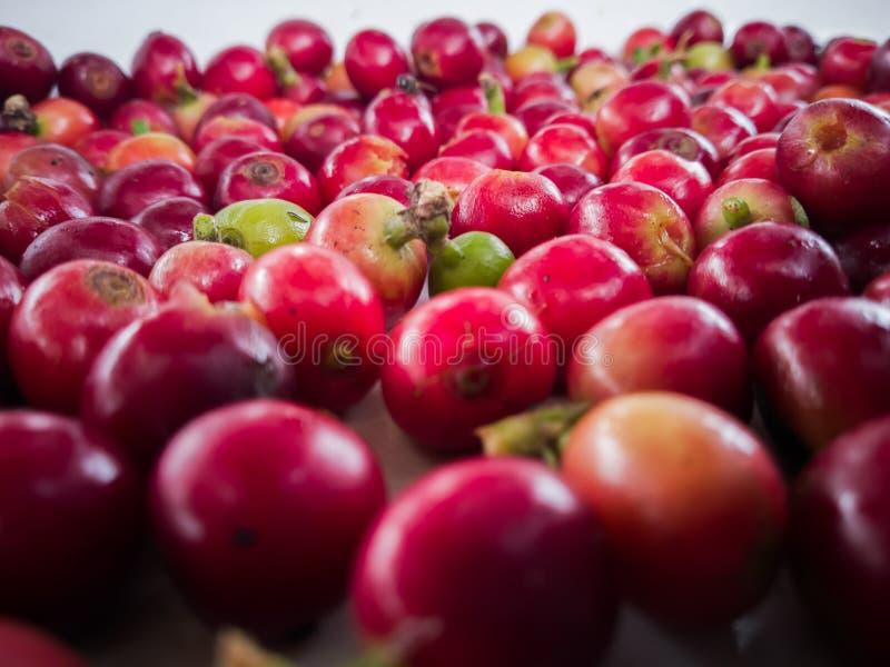 Beaucoup de grains de café rouges et verts dans la photo en gros plan photo stock