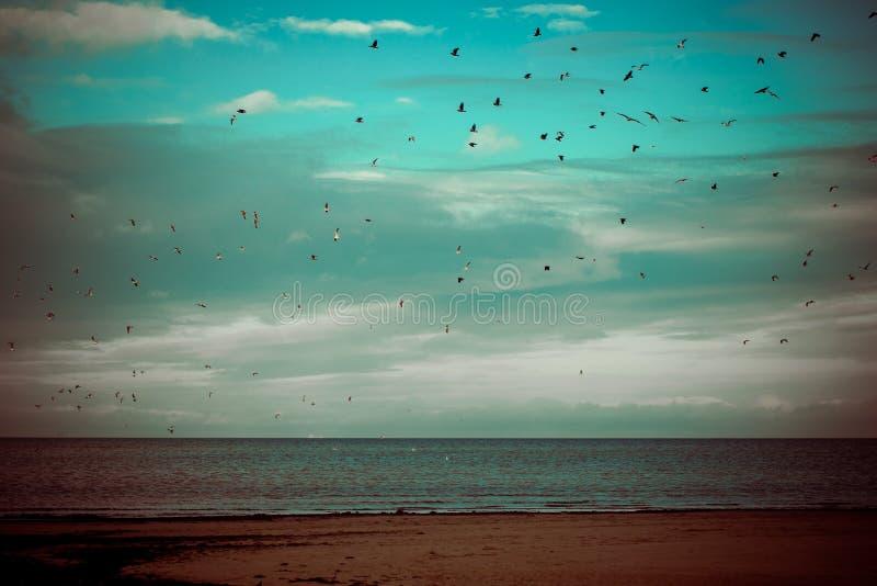 Beaucoup de mouettes sur le vol de plage - rétro regard de vintage images stock