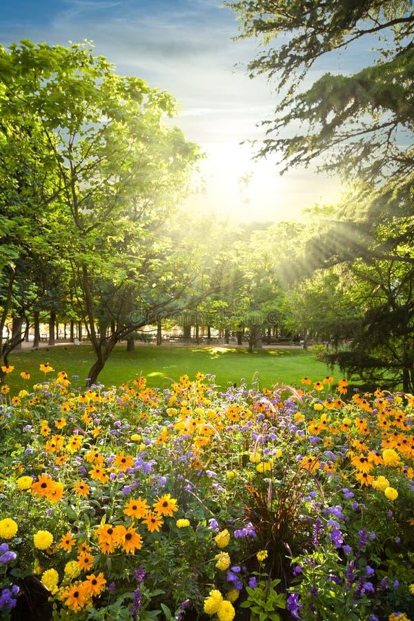 Beaucoup de Parterre de fleurs images stock