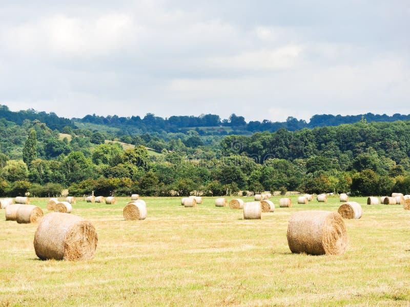 Beaucoup de petits pains de meule de foin sur le champ moissonné, Normandie photographie stock libre de droits