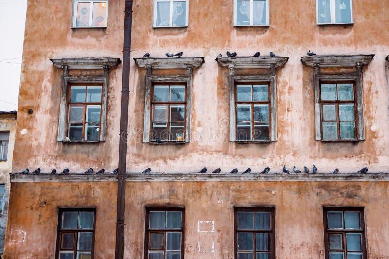 Beaucoup de pigeons sur une corniche d'une maison images libres de droits