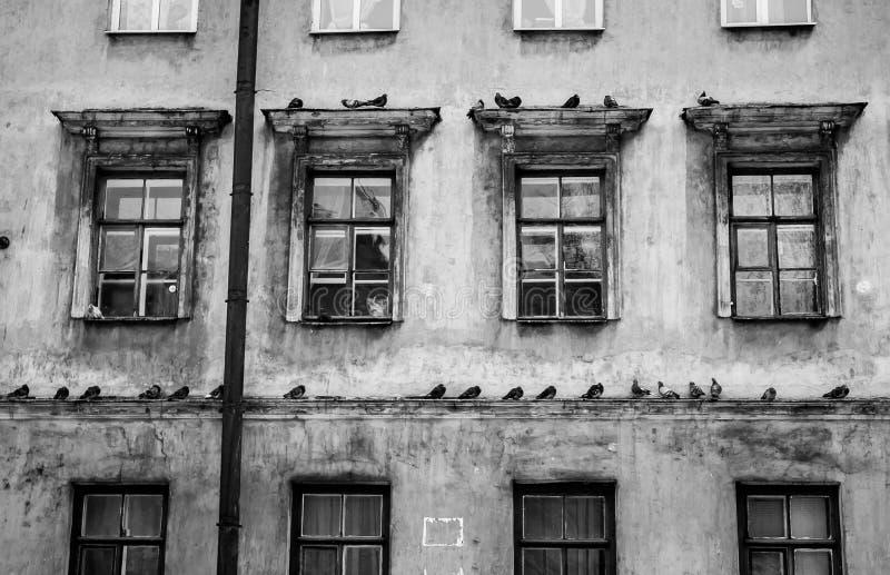 Beaucoup de pigeons sur une corniche d'une maison en noir et blanc photos libres de droits