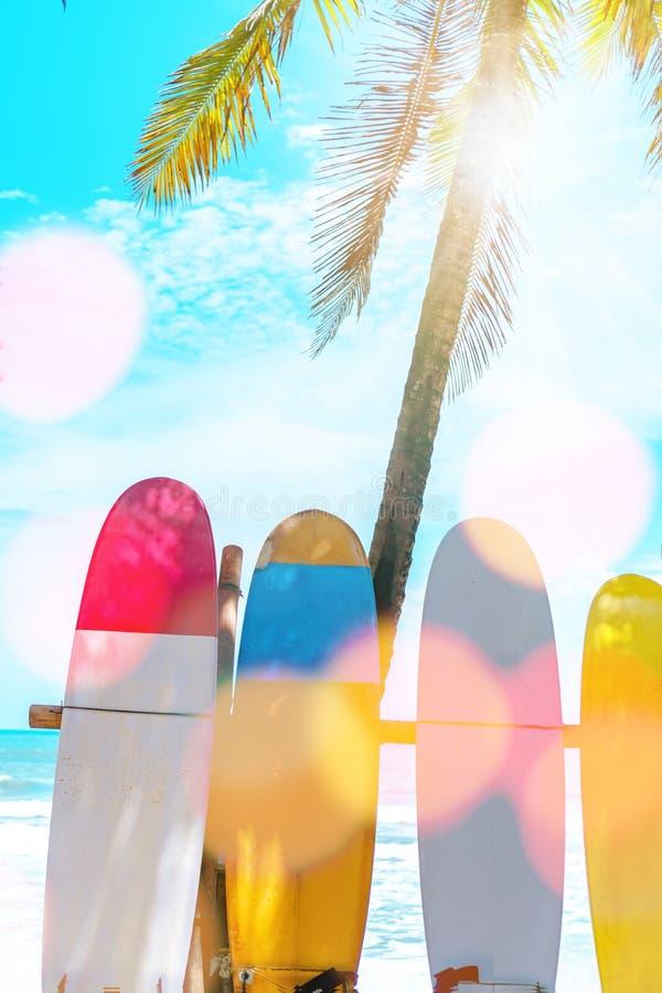 Beaucoup de planches de surf près des arbres de noix de coco à l'été échouent photo stock