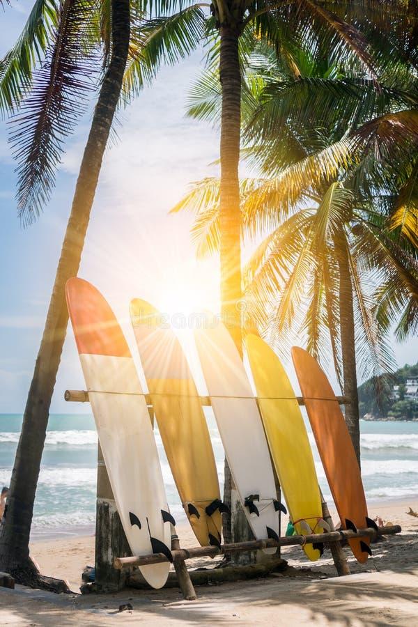 Beaucoup de planches de surf près des arbres de noix de coco à l'été échouent avec la lumière du soleil photographie stock libre de droits