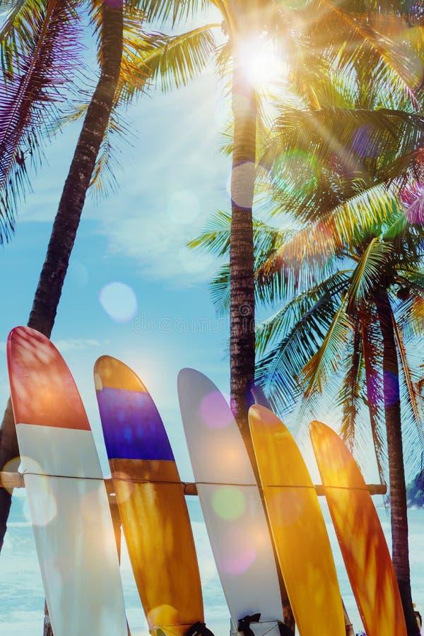 Beaucoup de planches de surf près des arbres de noix de coco à l'été échouent avec la lumière du soleil image stock