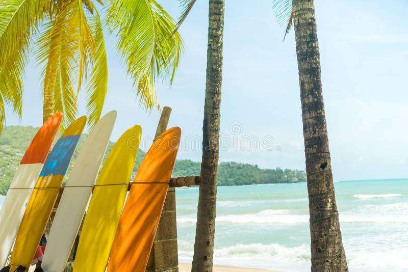 Beaucoup de planches de surf près des arbres de noix de coco photos stock