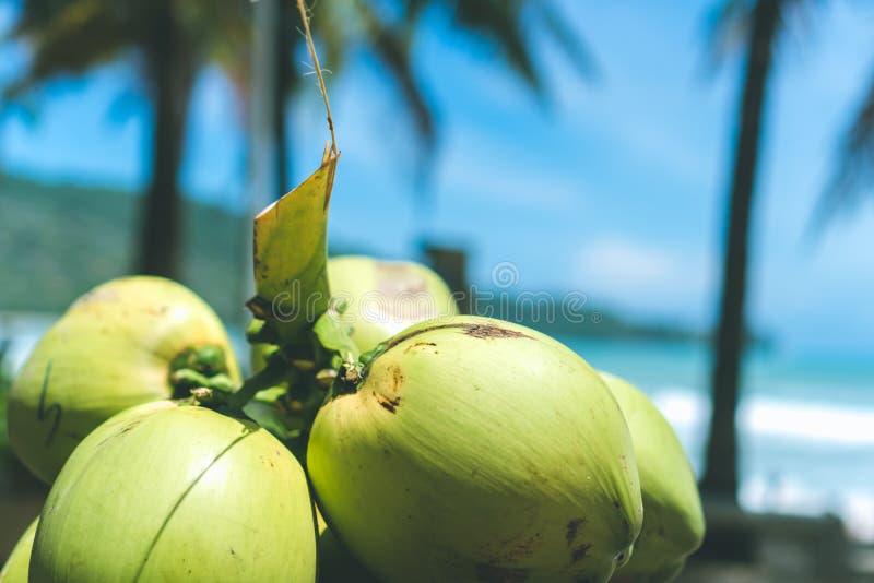 Beaucoup de planches de surf près des arbres de noix de coco image libre de droits