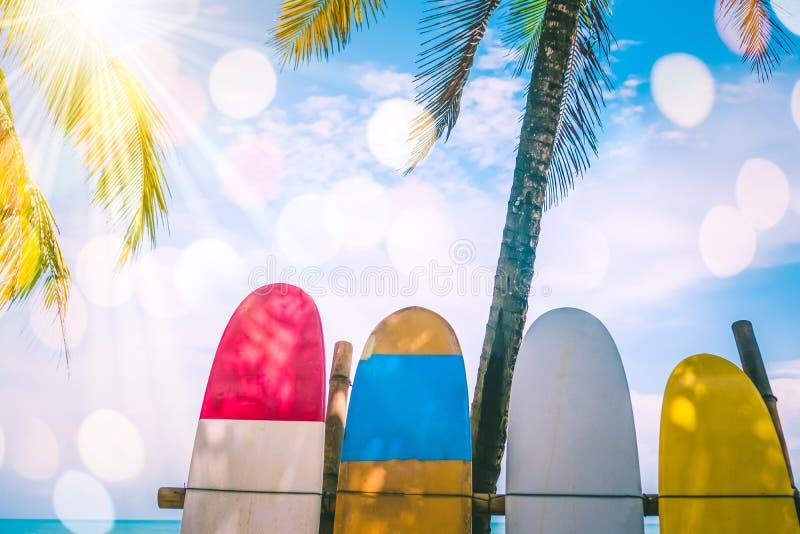 Beaucoup de planches de surf près des arbres de noix de coco images libres de droits