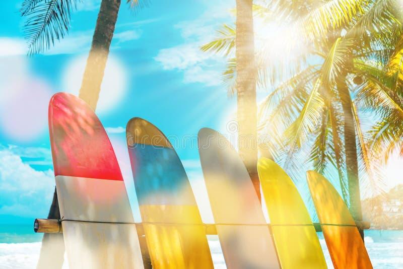 Beaucoup de planches de surf près des arbres de noix de coco photos libres de droits