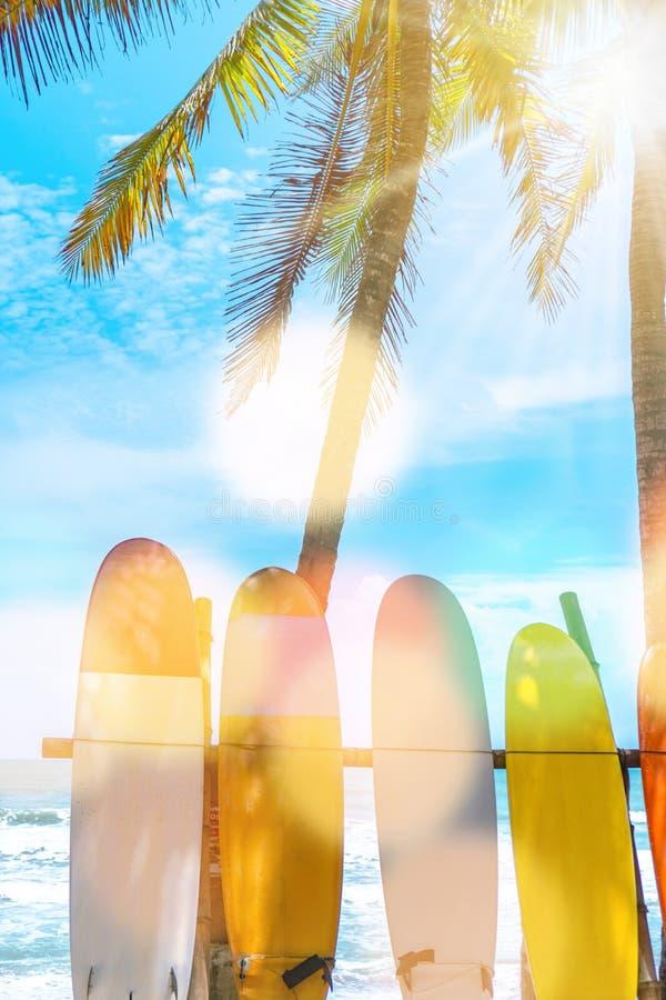 Beaucoup de planches de surf près des arbres de noix de coco photo libre de droits