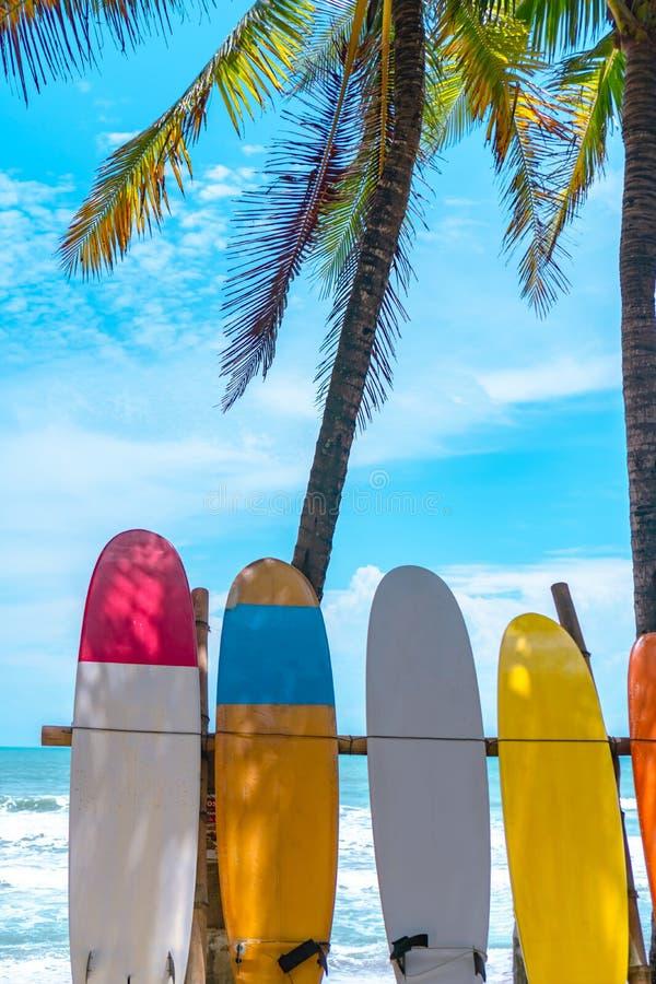 Beaucoup de planches de surf près des arbres de noix de coco en été échouent avec la lumière du soleil et le fond de ciel bleu image stock
