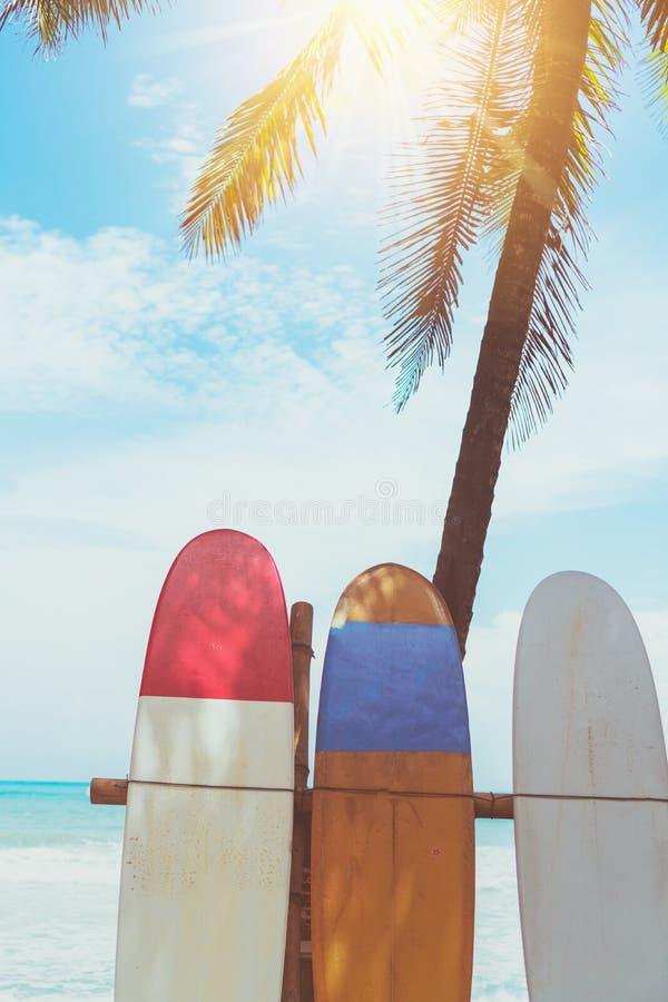 Beaucoup de planches de surf pr?s des arbres de noix de coco ? la plage d'?t? avec la lumi?re du soleil et le ciel bleu image stock