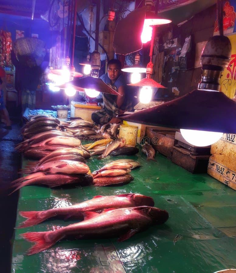 Beaucoup de poissons photographie stock
