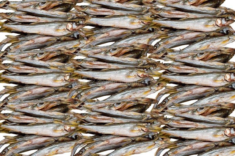 Beaucoup de poissons de capelan, modèle abstrait image libre de droits