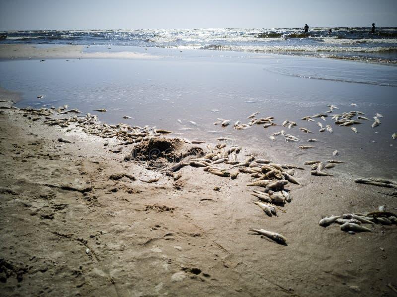 Beaucoup de poissons morts photographie stock